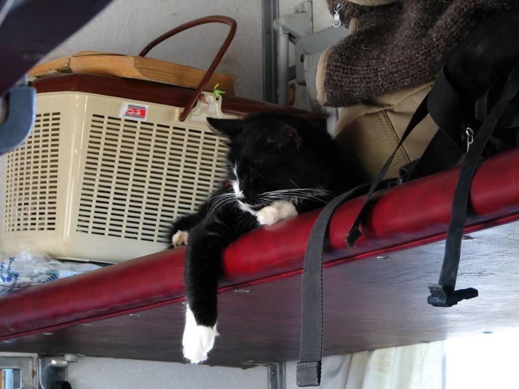Перевозка кошки в поезде — основные привила