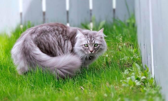 Полезно ли кошке гулять?: дневник группы «кошки - это кошки»: группы - женская социальная сеть myjulia.ru