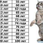 Возраст кошки по человеческим меркам: способы определения