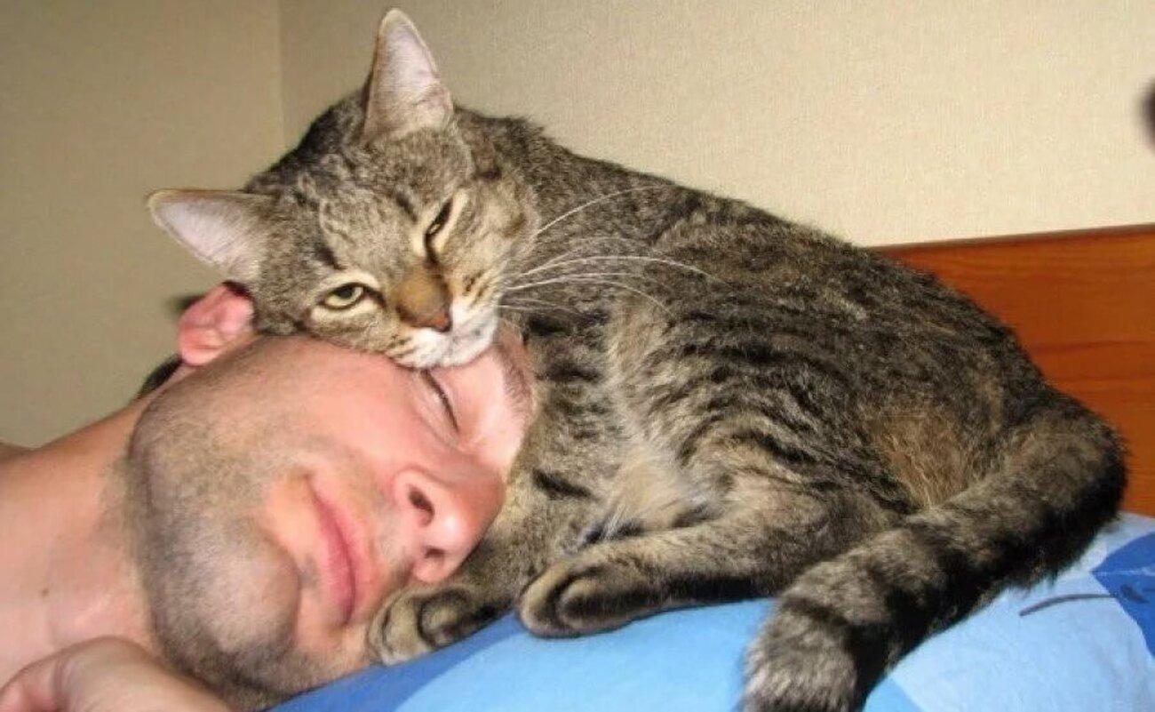 Как отучить кота спать в постели хозяев