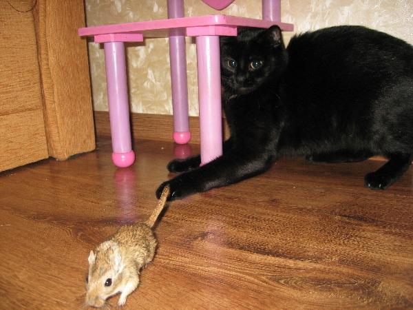 Про кошачью еду - мнение специалиста