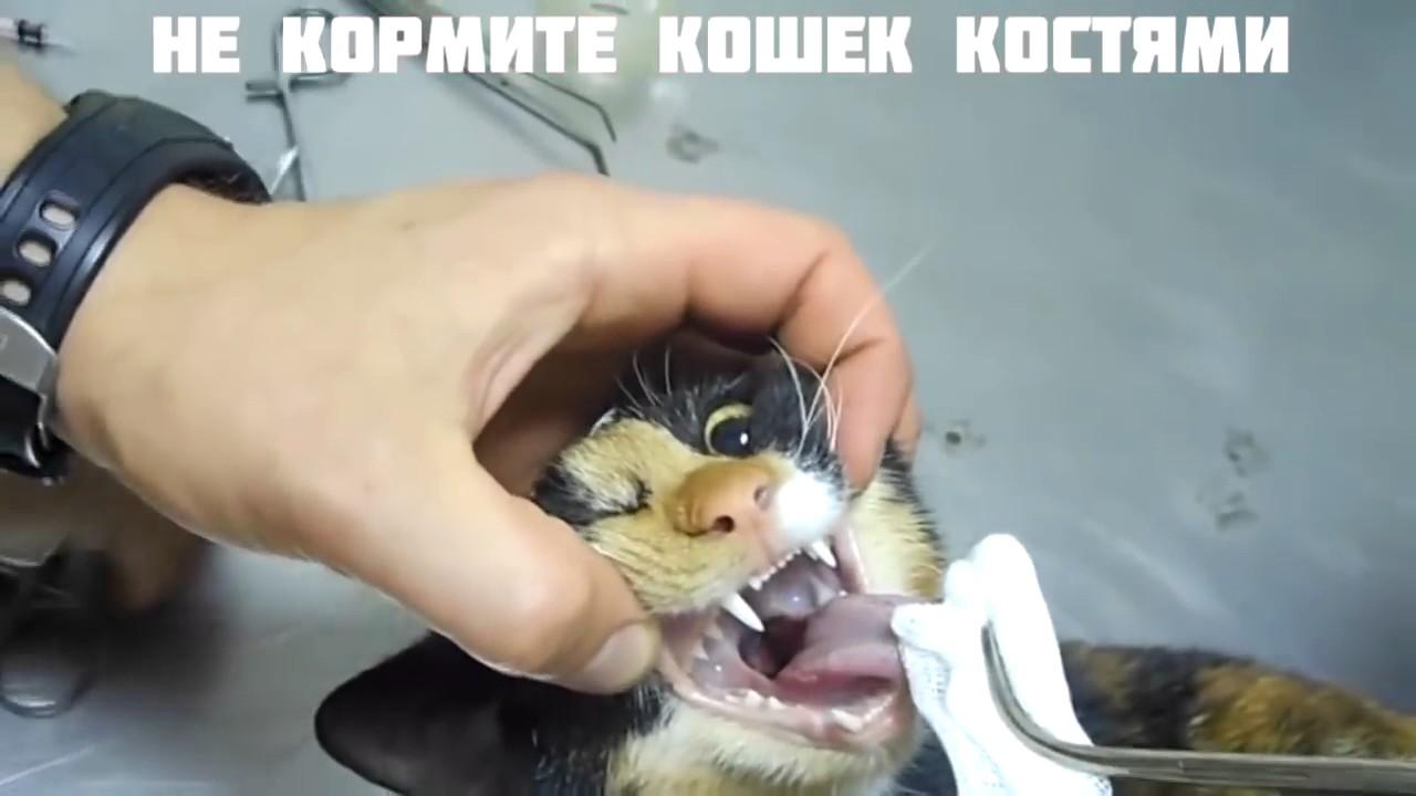 У кошки что то застряло в глотке как быть что делать | my darling cats