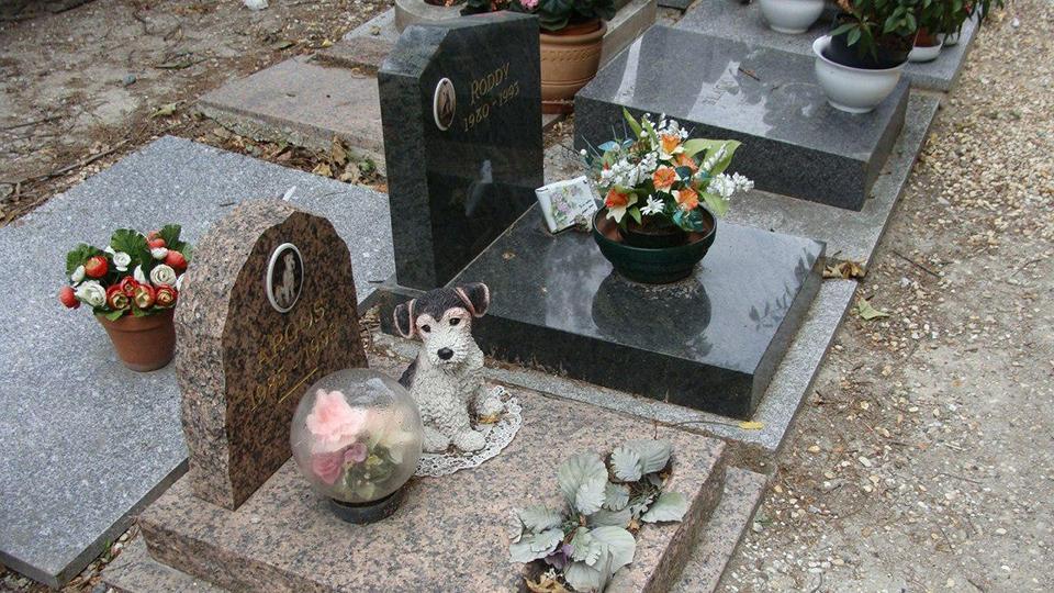 Сколько нужно ходить к кошке на могилу. как и где можно похоронить кошку зимой. места захоронений, не запрещенные законом