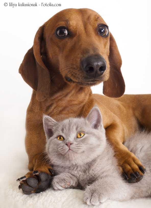 Домашние животные в англии: безграничная любовь и строгое воспитание - блог об англии марии радуги