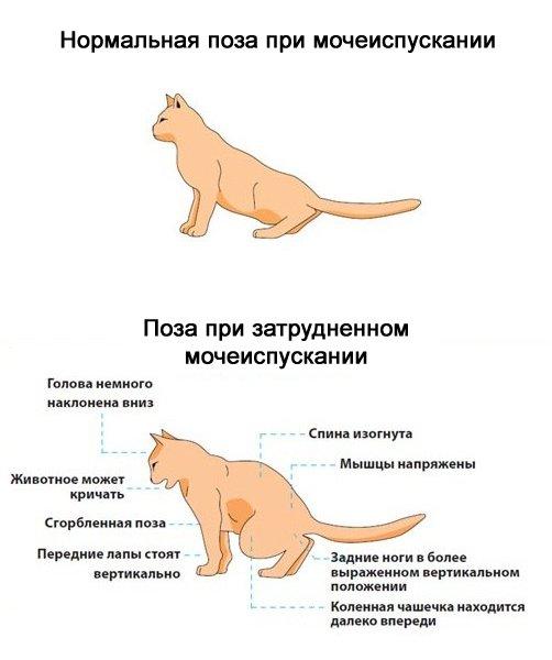 Какие кошки лечат болезни людей - муркин дом