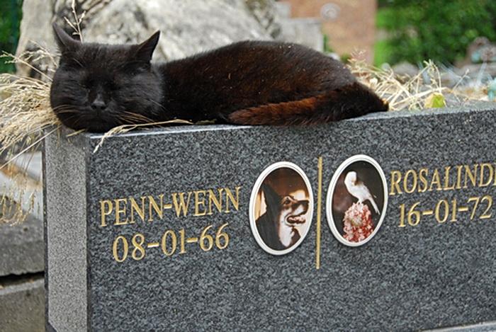 Как похоронить кошку