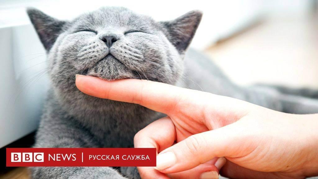 Уродливые кошки
