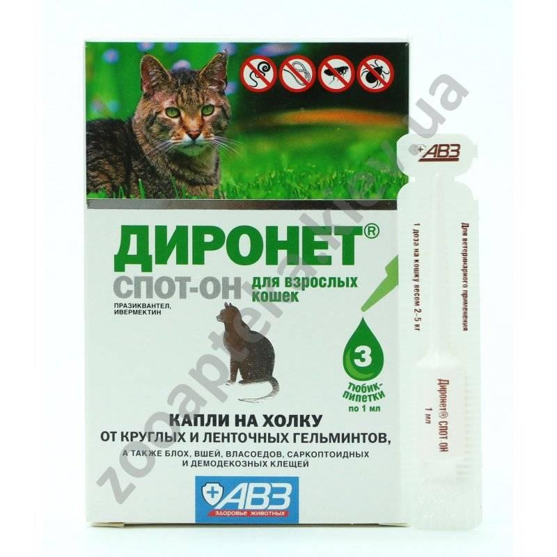 Обзор лучших глистогонных препаратов для кошек
