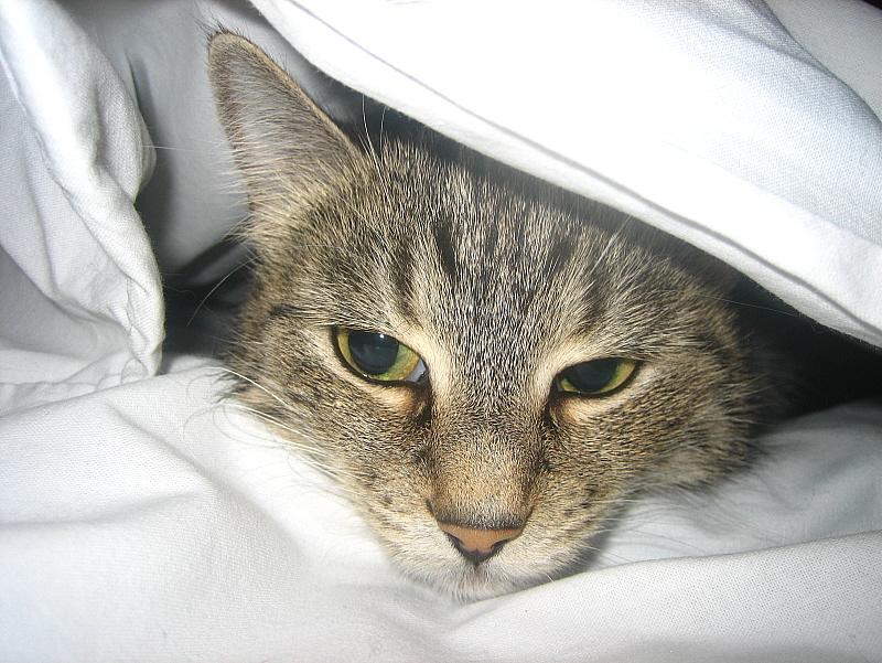 Сальмонеллез у кошек: источники заражения, проявления и терапия