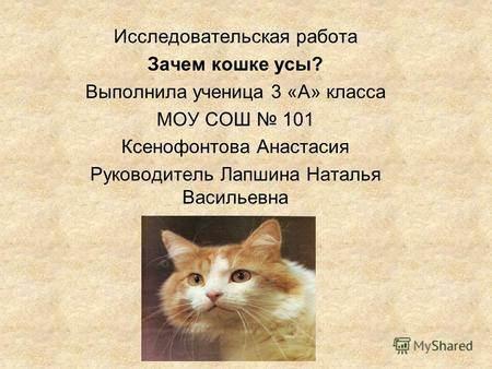 Особенности кошек - домашний любимец