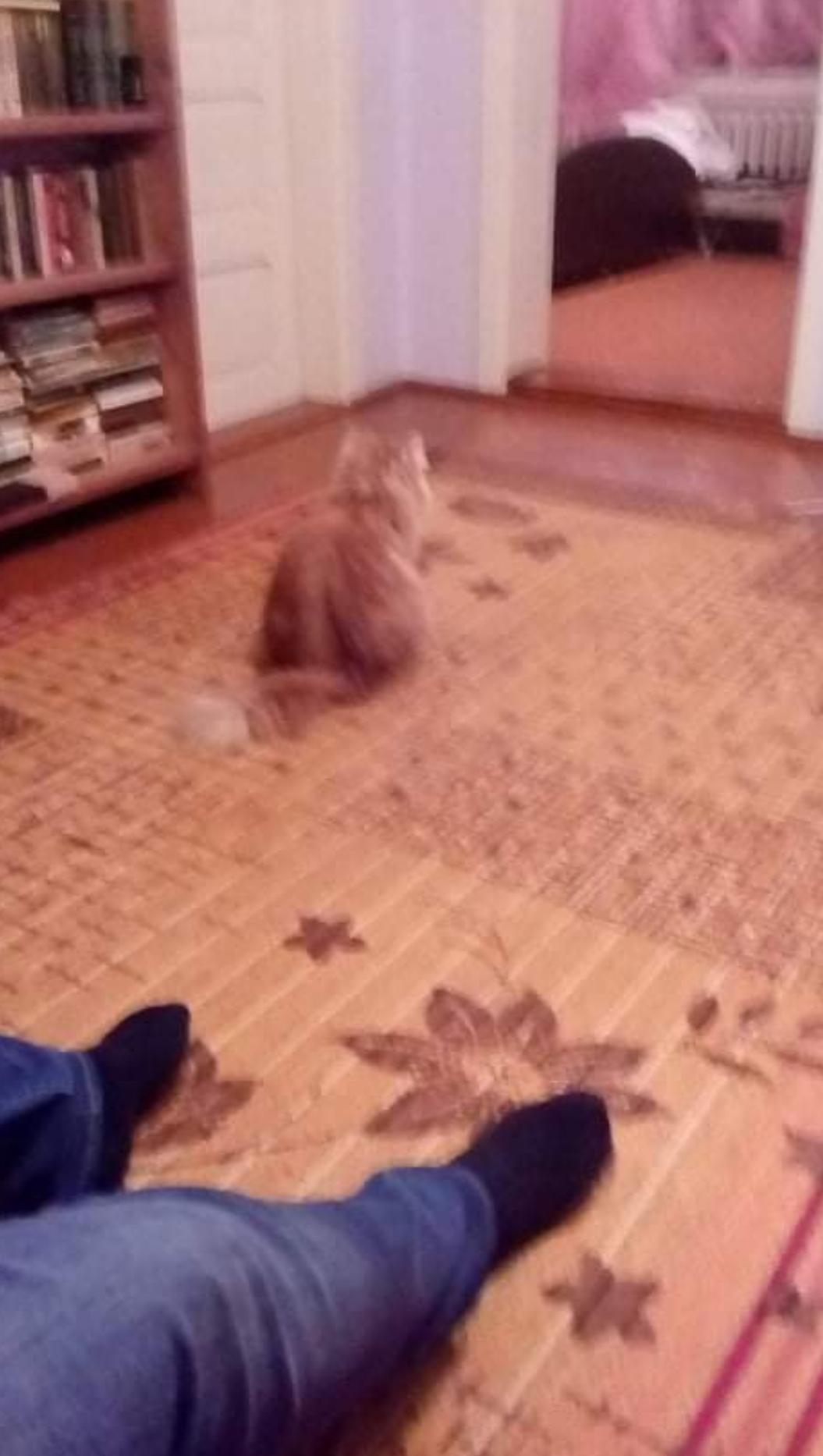 Почему кошка гадит мимо туалета, фото, основные причины, рекомендации по коррекции поведения