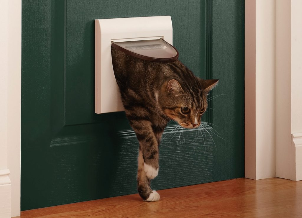 Как сделать вход для кошки в двери? - домашний уют от agrostroy2.ru