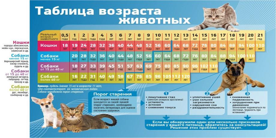 Возраст кошки по человеческим меркам — разъясняем обстоятельно