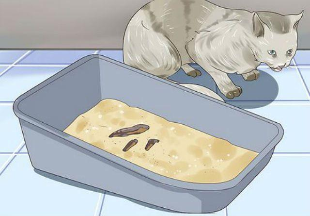 Рвота у кота непереваренным кормом