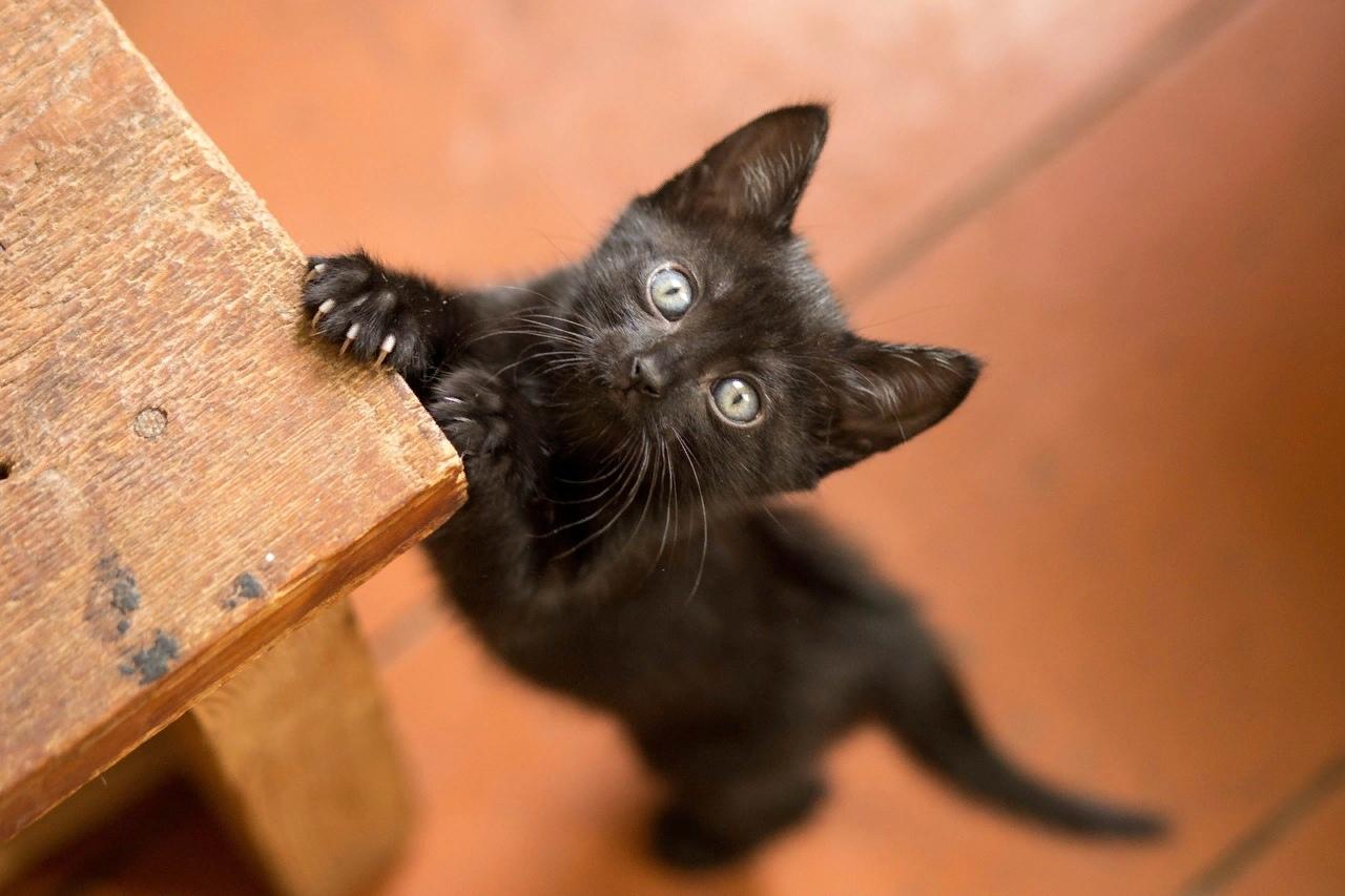 Что несут черные коты в дом?