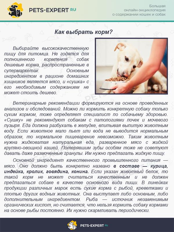 Как кормить кошку сухим кормом: можно ли только таким или надо разными и как правильно, каким лучше, стоит ли собачьим или влажным