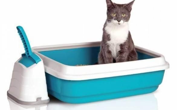 Про кошачий туалет и мусор на полу