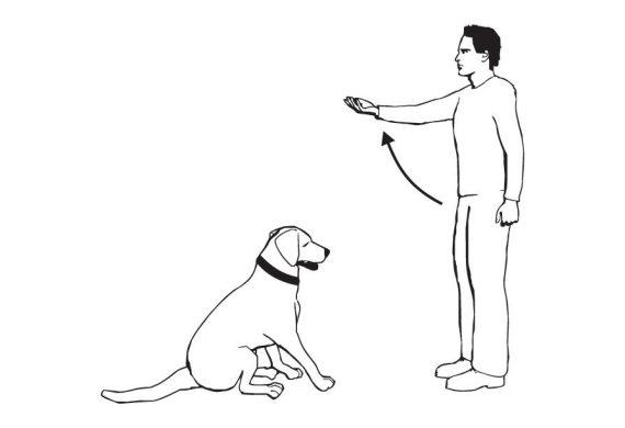 Как дрессировать кошку в домашних условиях: лучше один раз увидеть