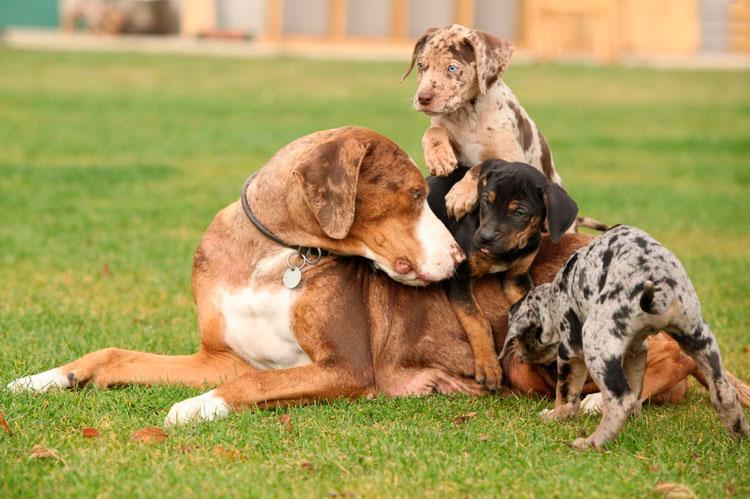 Породы собак с острыми ушами: черная, высокая, маленькие