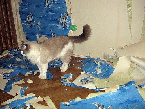 Чем коты метят