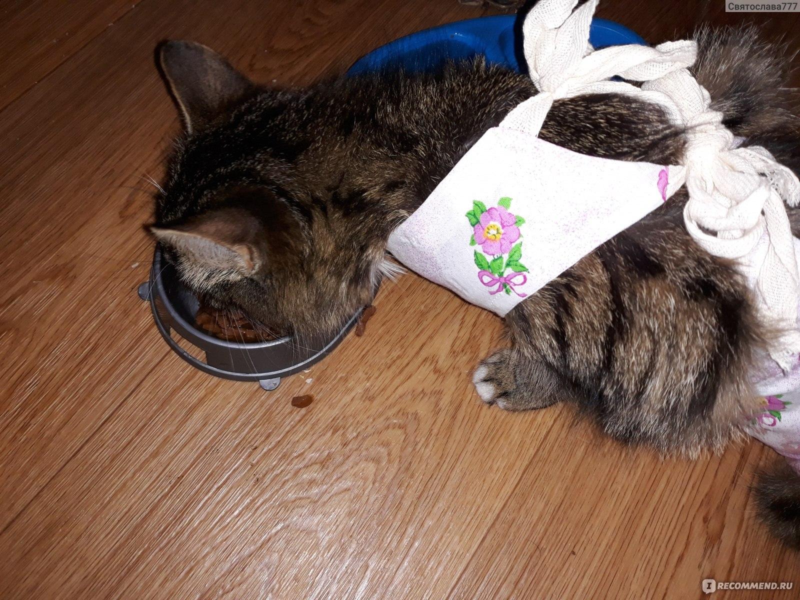 Кошка после стерилизации не ходит в туалет: возможные причины
