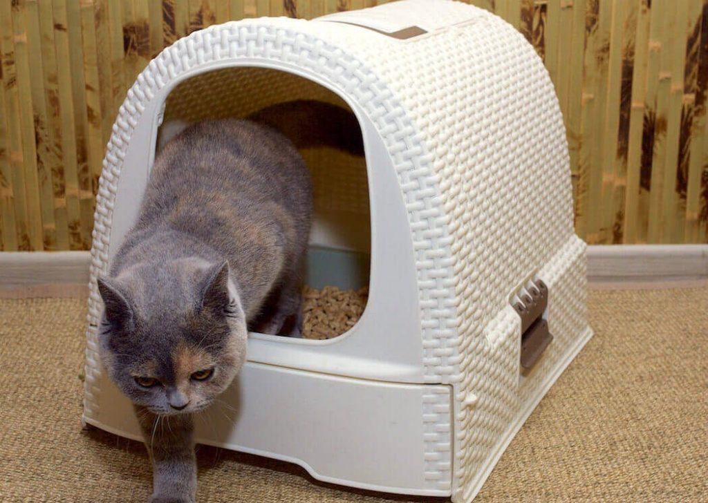 Как приучить кота к лежанке?