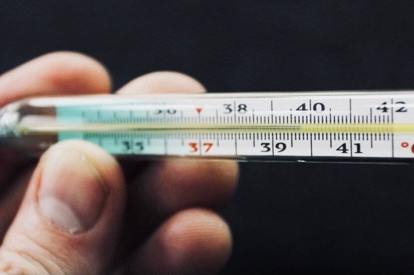 Как измерить температуру коту в домашних условиях: способы