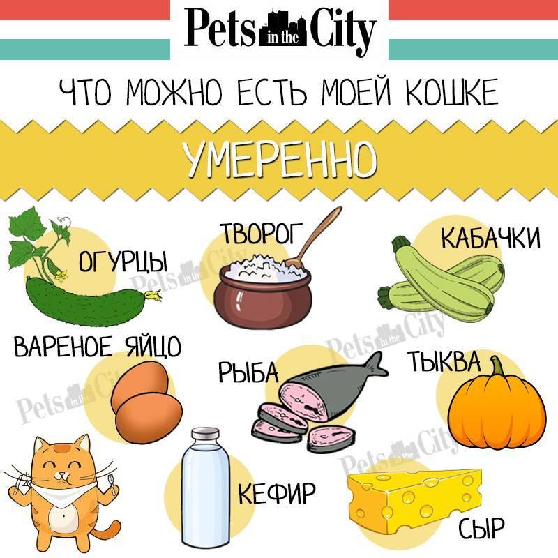 Можно ли кошкам молоко, кефир и сметану?