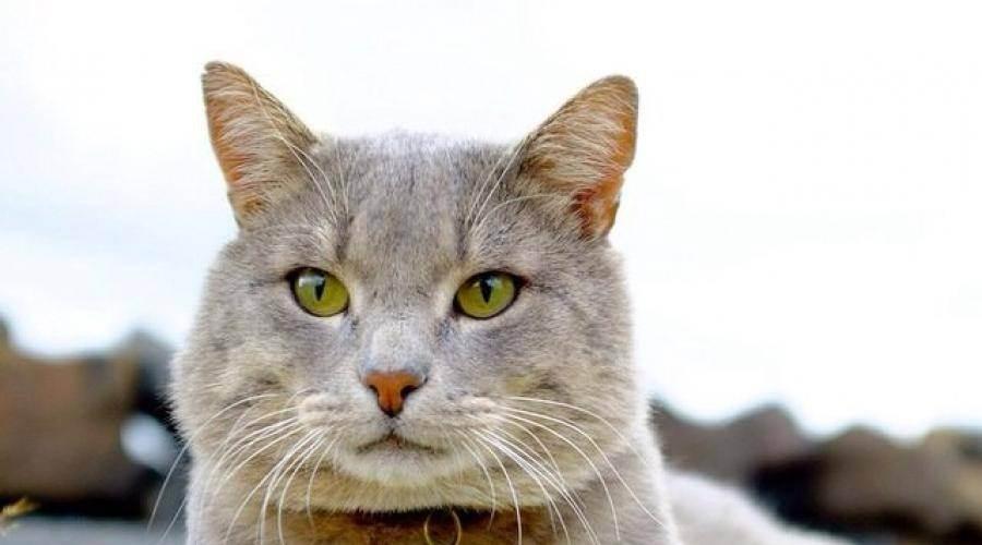Почему кошка часто чихает?
