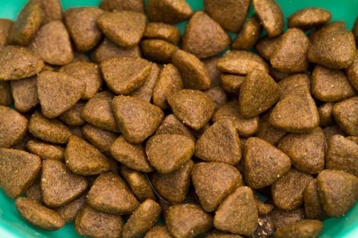 Сколько раз кормить кота сухим кормом?