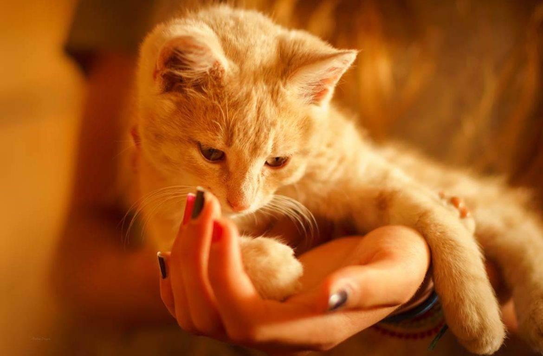 Советы от ветеринара: чем лечить лишай у кошки и не допустить заражения домочадцев