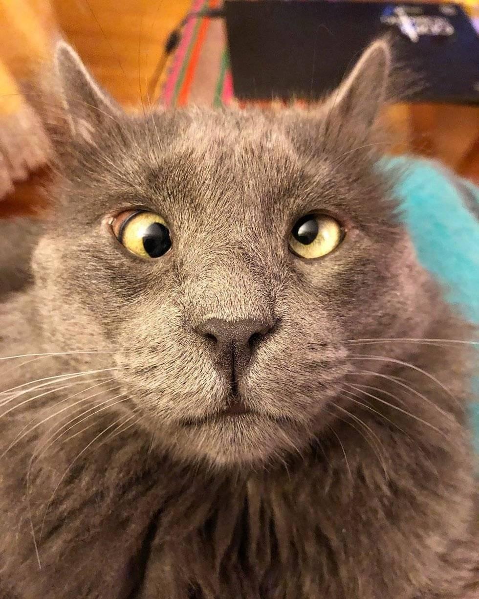Подробный обзор котов с косыми глазами и описание их внешнего вида