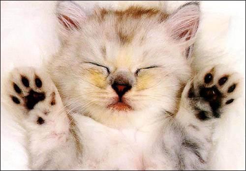Сонник кошка хорошая. к чему снится кошка хорошая видеть во сне - сонник дома солнца