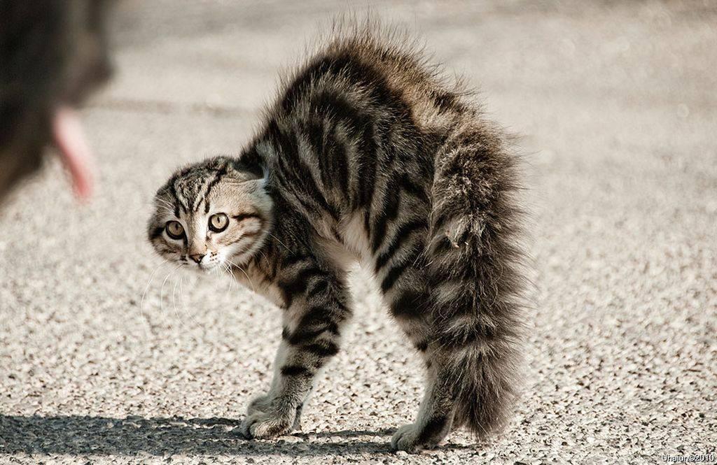Причины и лечение насморка у кошек и котов