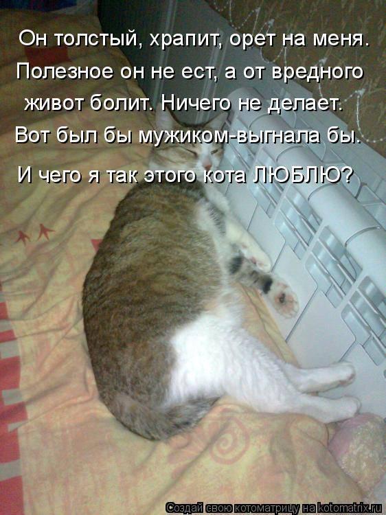 Кошки болезни живота - муркин дом