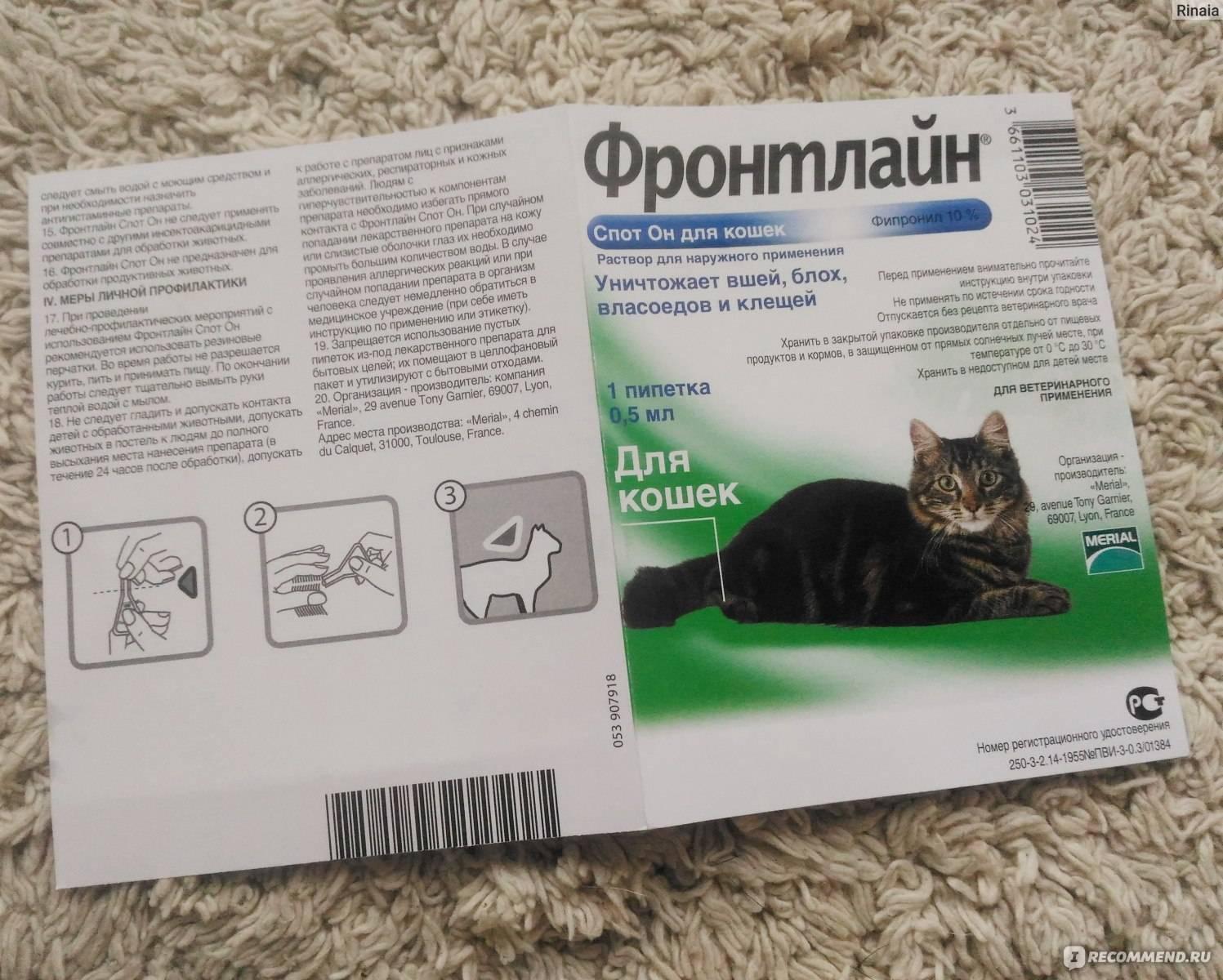 Профендер для кошек: инструкция по применению, отзывы, плюсы и минусы средства