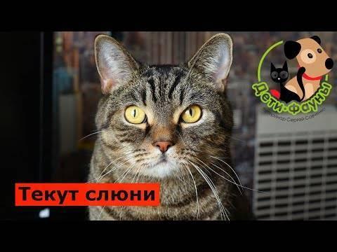 Почему у кота текут слюни изо рта? | рутвет - найдёт ответ!