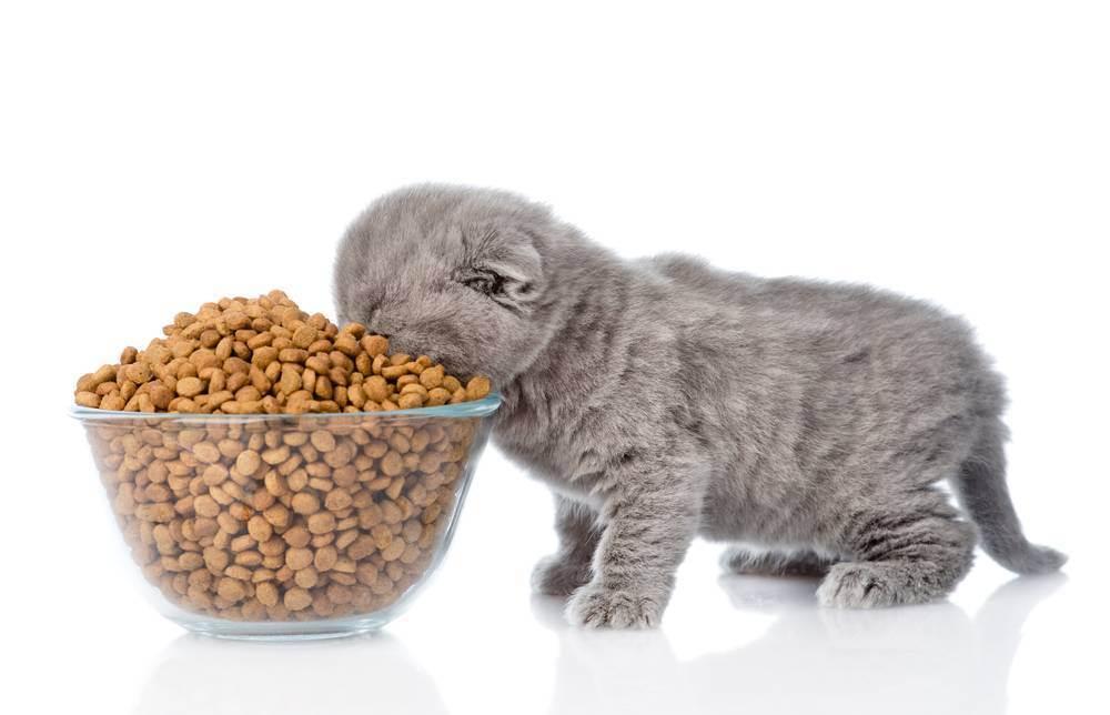 Как правильно кормить кошку сухим кормом и полезно ли это