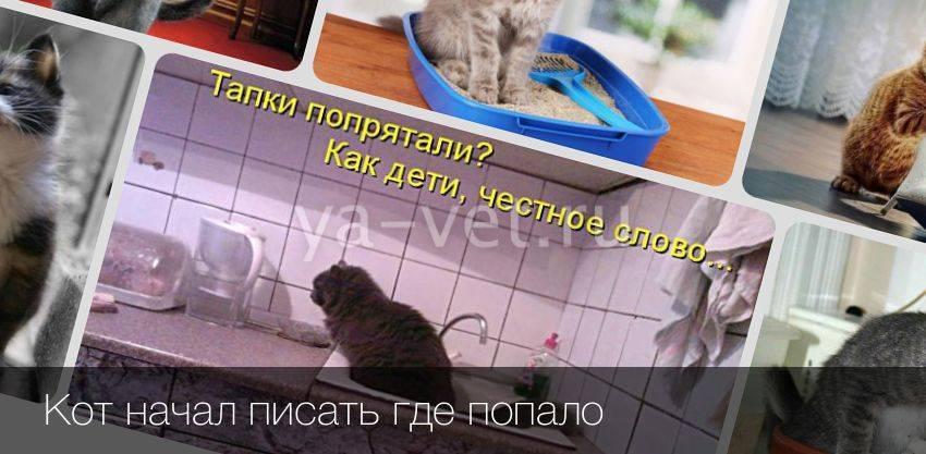 Кошка писает на кровать: что делать хозяину