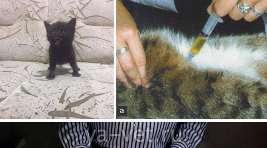 Анализ мочи у кошек и собак: методы сбора урины, расшифровка