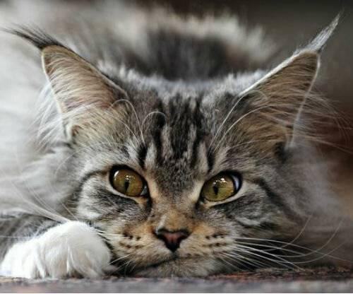 Рвота с кровью у кошки - возможные причины патологии