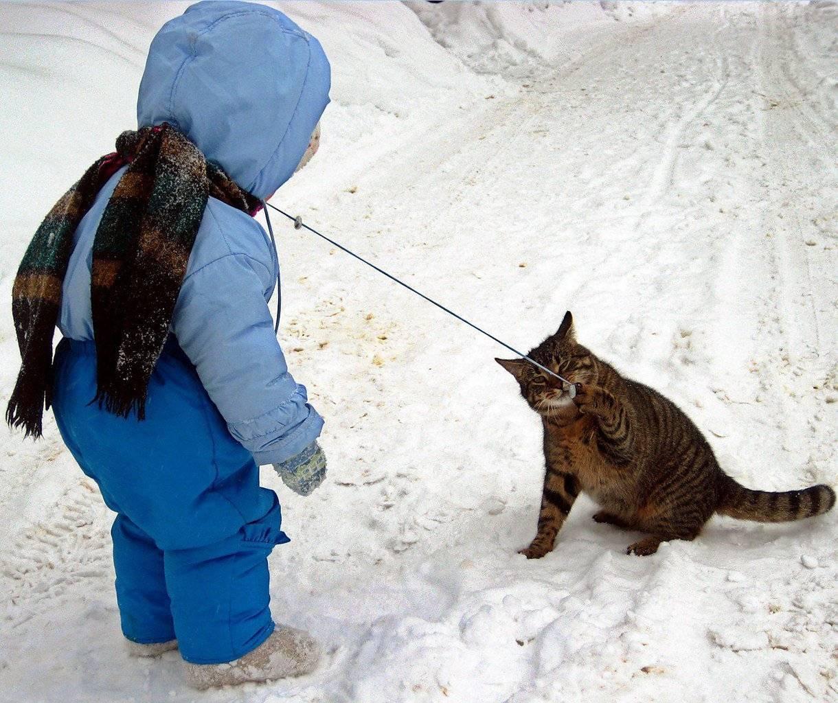 Кошка гуляет (течка) после стерилизации: почему, что делать   zoosecrets