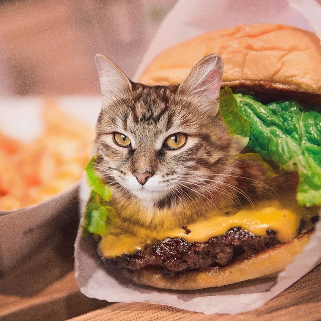 Что кошки любят кушать больше всего