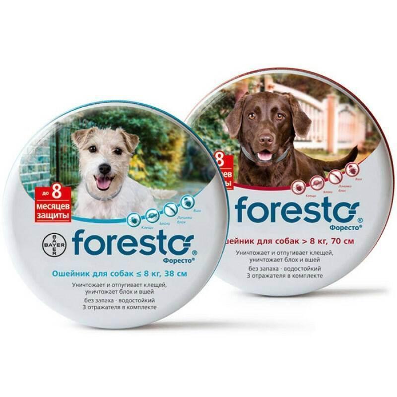 Ошейник против блох и клещей bayer foresto для собак — отзывы. негативные, нейтральные и положительные отзывы