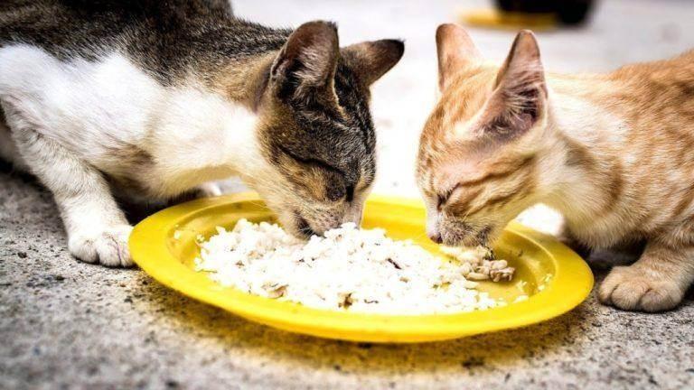 Можно ли кошкам рыбу – польза и вред