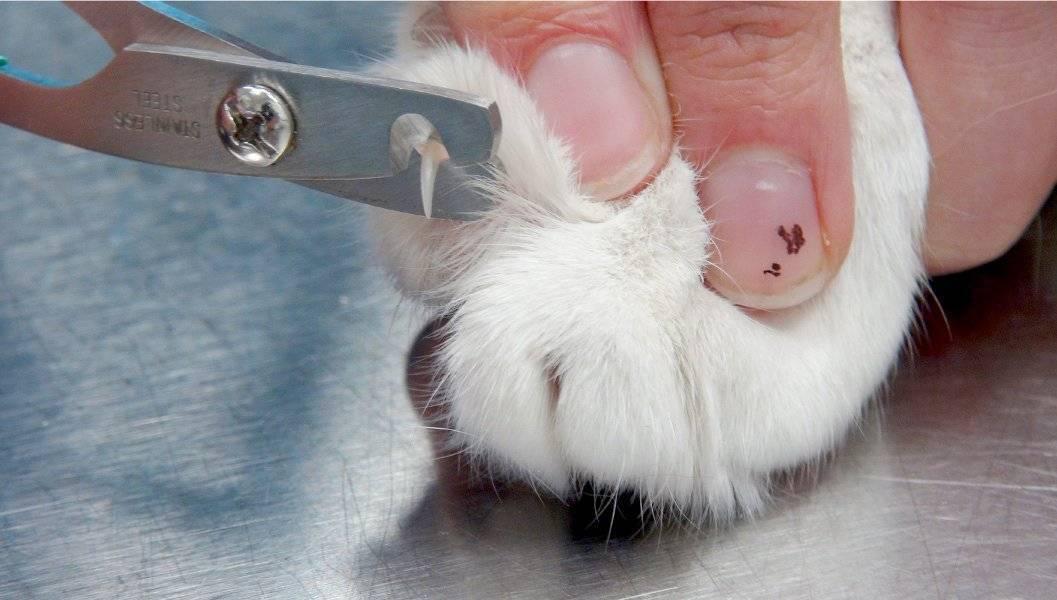 Как и чем подстричь когти котенку: новорожденному в первый раз, ножницами или когтерезом