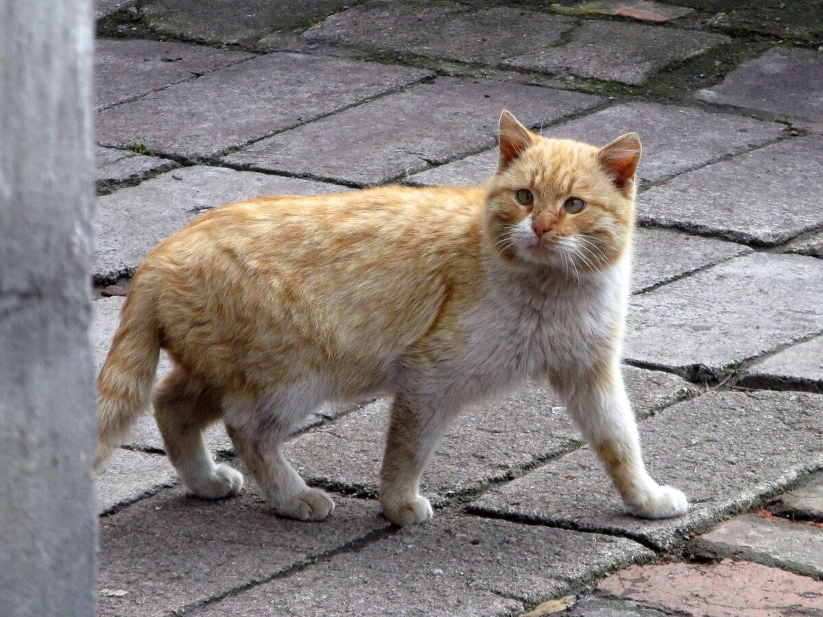 Беспородные кошки, особенности ухода и характера. домашние кошки – такие обычные и такие разные полосатый дворовый кот