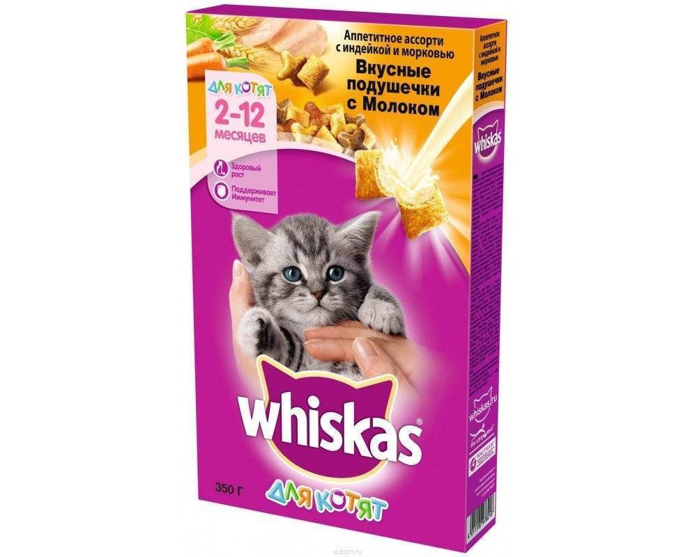 Как приучить котенка к сухому корму: переводим без проблем