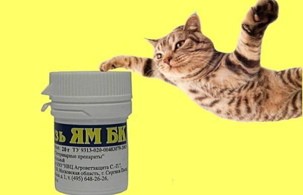 Лишай у кошек: лечение до полного исцеления