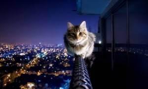 Падение кошки с большой высоты (окна, балкона)